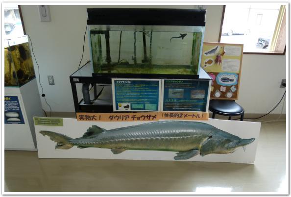 歴史は繰り返す「函館市臨海研究所」について