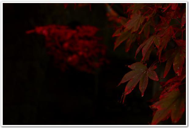 晩秋の色に染まる 函館公園を散策してみると