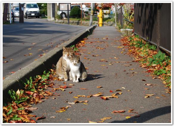 日なたで微睡む「野良猫たち」の函館元町