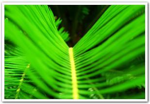 目にも優しい緑の光「函館熱帯植物園」で避暑ってみる