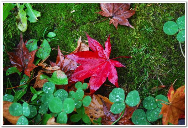 紅葉のタイミングを図りつつ「大沼公園」