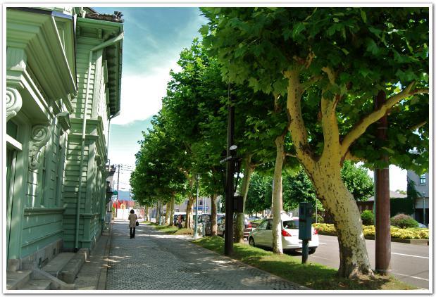 プラタナスの木が映える 函館の並木道