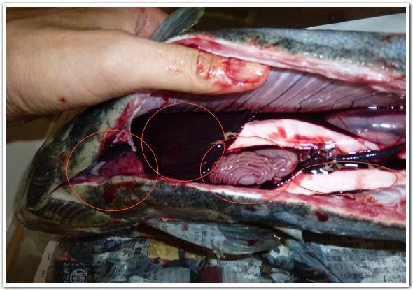 ふんわり鮭のムースとレバーペーストに舌鼓