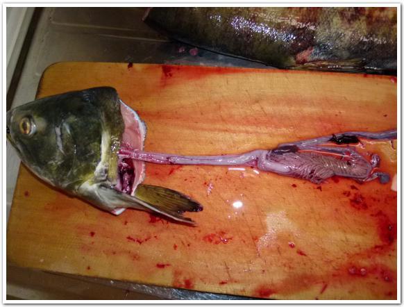 鮭のホルモンと心臓を食べた事がありますか?