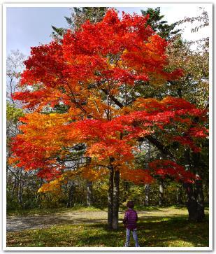 函館の水源地で愛でる紅葉 笹流ダム