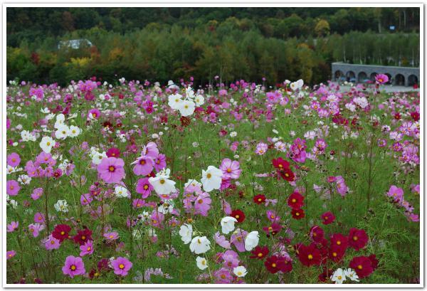 スキーゲレンデに思う「滝野すずらん公園」の四季の花