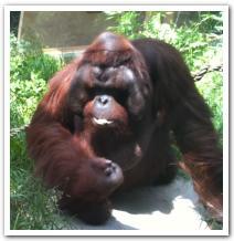 円山動物園に行ってみた