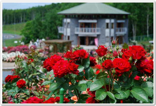 薔薇咲く丘の上から感じる 屯田兵の鐘の音