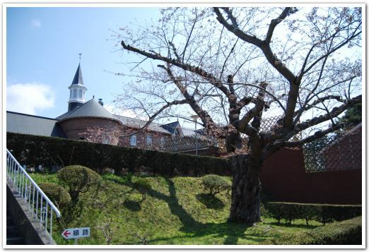 トラピスチヌ修道院の開花状況(5月5日)
