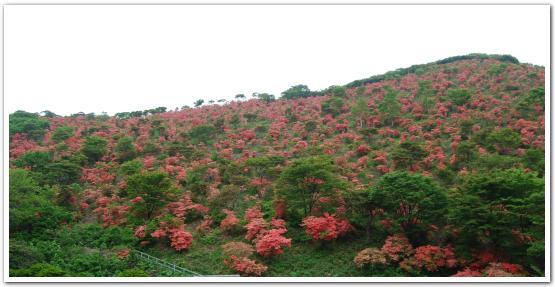 函館市恵山「つつじ公園」に行ってみた
