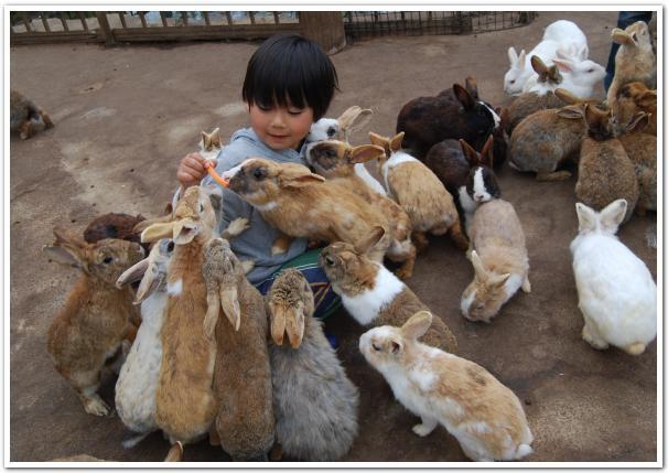 大沼でウサギに襲われた
