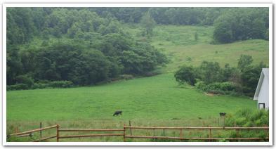 赤井川村の「山中牧場」に行ってみた