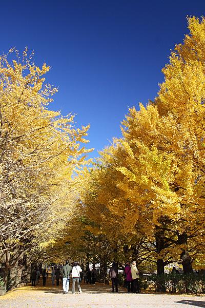 秋の昭和記念公園(08/11/22)
