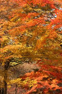 秋の武蔵丘陵森林公園(08/11/29) 2008/12/14 10:27:07