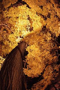 武蔵丘陵森林公園ライトアップ(08/11/29) 2008/12/14 10:55:11