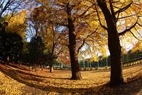秋の砧公園(08/11/30) 2008/12/14 12:22:46
