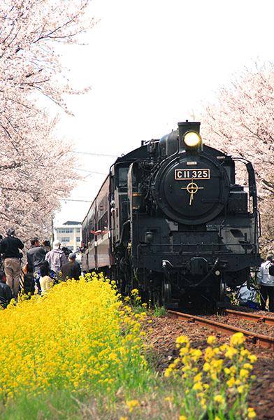 真岡鐵道の桜(06.4.9)