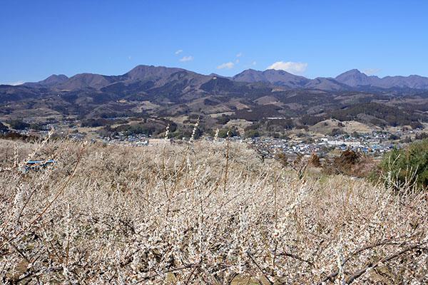 箕郷梅林・榛名梅林・秋間梅林(2007.3.13)
