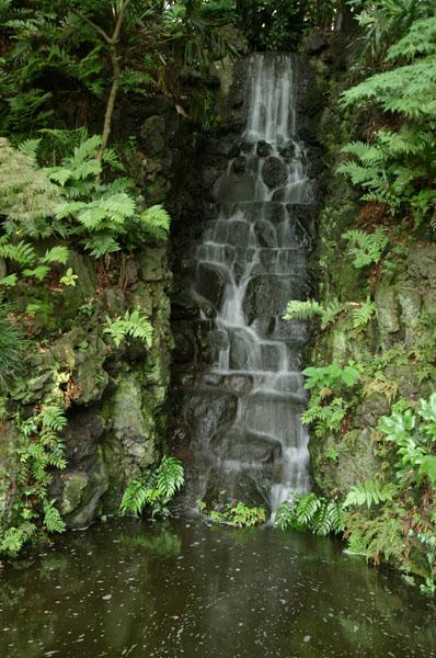 本土寺のあじさい(2006年6月24日)