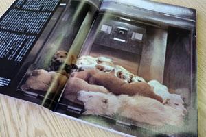 札幌市動物管理センターの「殺処分」動画を公開