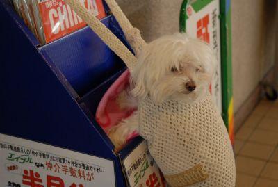 地下鉄のバッグ犬