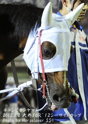 チャンピオンヤマトの馬具