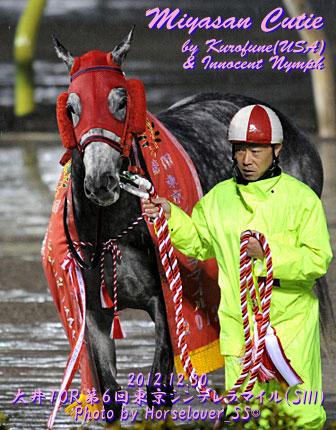 ミヤサンキューティ 第6回東京シンデレラマイル優勝