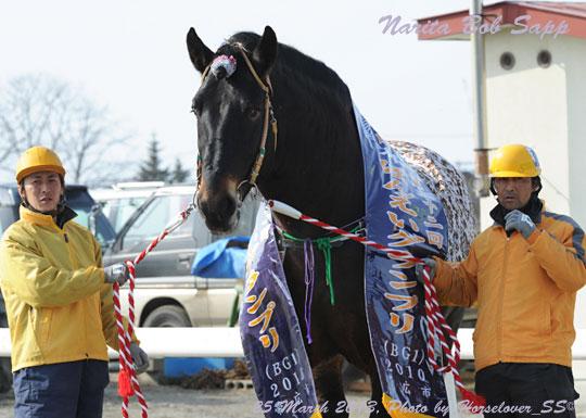 ナリタボブサップ 爪の大きさは馬体に比例しない?