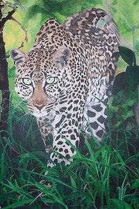 Stalking Leopard - 獲物を探す豹