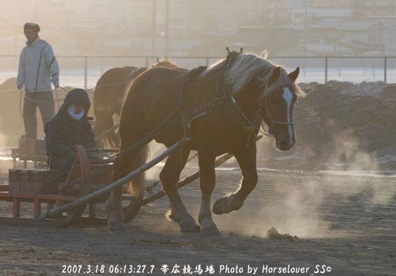 朝焼けの調教風景 - ばんえい十勝帯広競馬場