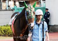 浦和にいたマキノスパーク、ステイヤーズカップ優勝(^o^;)