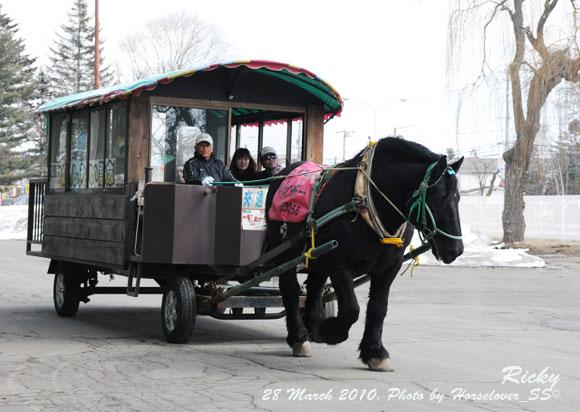 被災地での物資の運搬に馬は使えないのか?