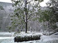 予報通り大雪