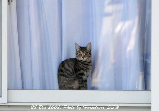 猫も走る師走 - 第54回東京大賞典(JpnI)