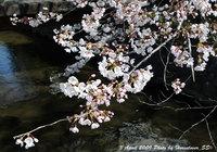 4月3日の桜と4月2日の富士山、皇居、国会議事堂