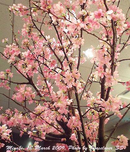 桜満開 - 第55回桜花賞(SI)