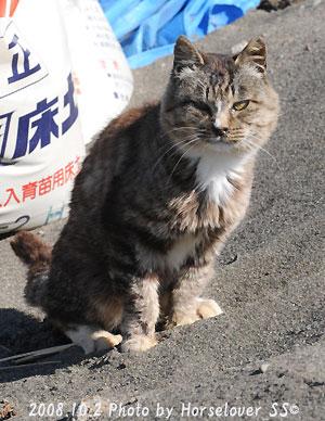 番猫さんからのフォトレター~錦秋特別