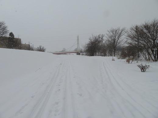 2月も後半、寒い日が続いている札幌 春が待ち遠しいなぁ
