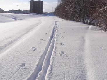 今日の札幌は気温が低くなりツルツルです
