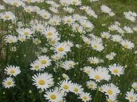 6月札幌草花が一斉に咲く時期です、私たちも日々過ごしています。