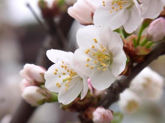 花の季節がやってきた