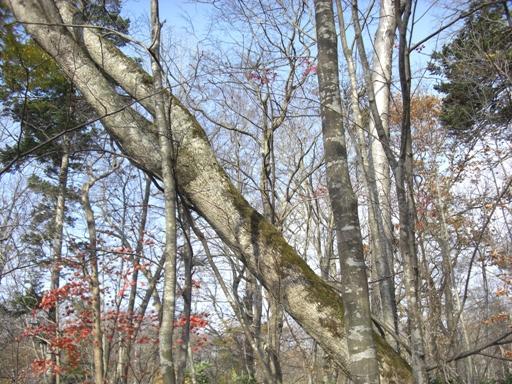 野幌森林公園にて