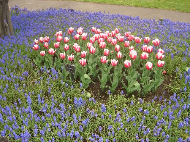 5月の豊平公園
