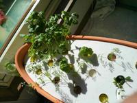 水耕栽培とケバブ