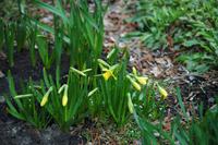 春です_1