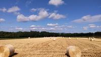 麦刈り の巻
