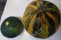 種食用かぼちゃ