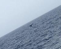 今シーズンラストのクジラかな