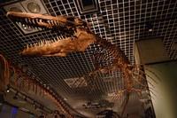 ティロサウルス・プロリゲル