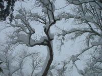 冬の樹木を撮る!!!